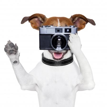 image-hosting-main