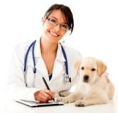 veterinarian-websites